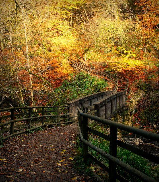 """Calderglen Bridge""  --  [The old wooden bridge that crosses over the Rotten Calder River at Calderglen Country Park in East Kilbride, Scotland.]~[Photo by © Jamie Mitchell - November 1 2011 - East Kilbride, Scotland, Great Britain]'h4d'121018"