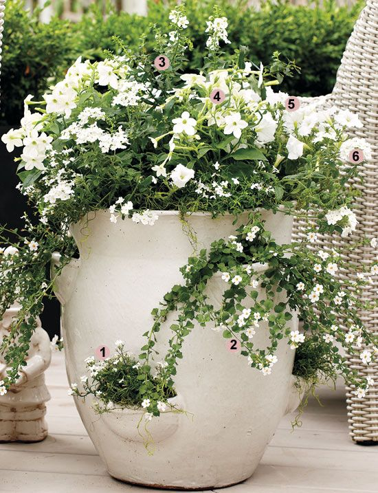 Pin By Carmen Johnston Gardens On Container Gardens Container