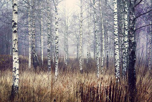 IMG_5887 by robinhaldert, via Flickr