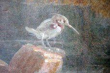 Smyrnankalastaja on lajinsa ainoa yksilö Pompejin seinämaalauksissa. Lajin harvinaisuus kuvissa ja sen levinneisyys itäisellä Välimerellä viittaavat siihen, että maalari on saanut oppia hellenistisen idän taidekeskuksissa.
