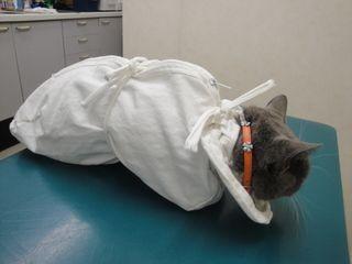 猫エイズワクチン - ゆる~い毎日が好き