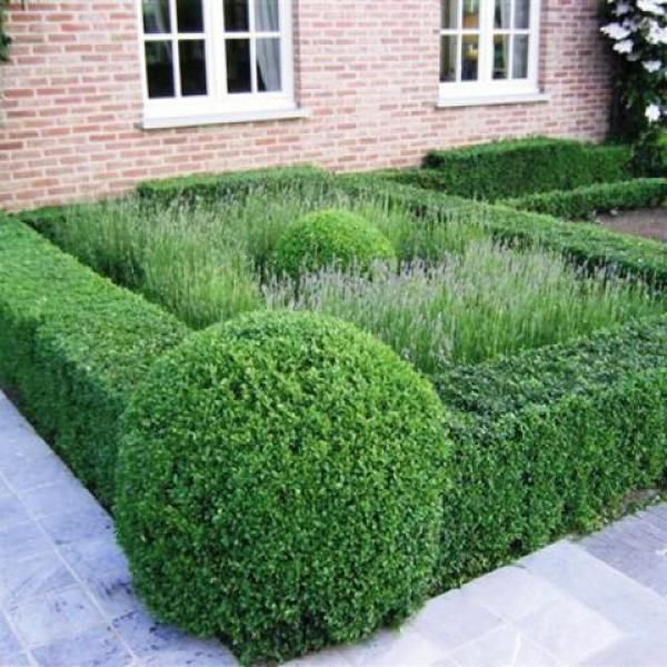 tightly clipped hedges and topiary balls with grasses - Haag van buxus