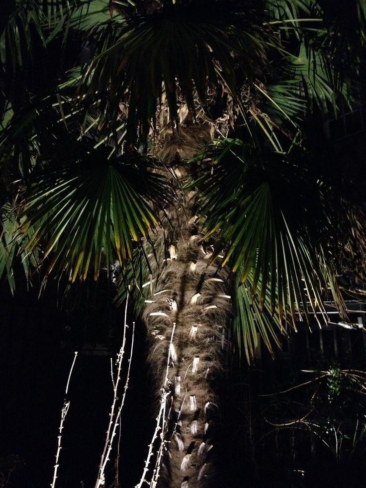 Amsterdam Hortus palm