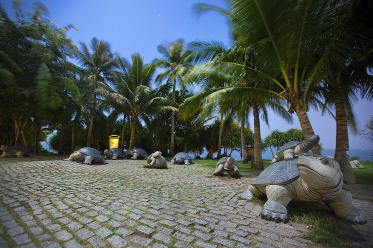 Enjoy island resort life in Sanya and take in the idyllic tropical beauty that only palm trees can offer.