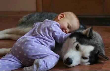 beautiful dog & baby - Dogs Photo