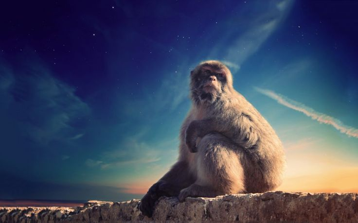 Download this free photo here www.picmelon.com #freestockphoto #freephoto #freebie /// Magical Monkey and the Sky | picmelon