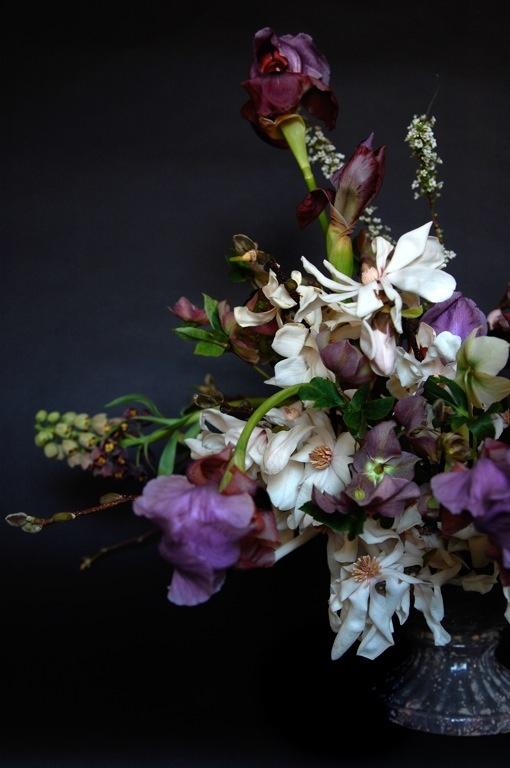 Magnolia, Bearded Iris, Frittilaria, Spirea, HelleboresBeards Iris, Bearded Iris