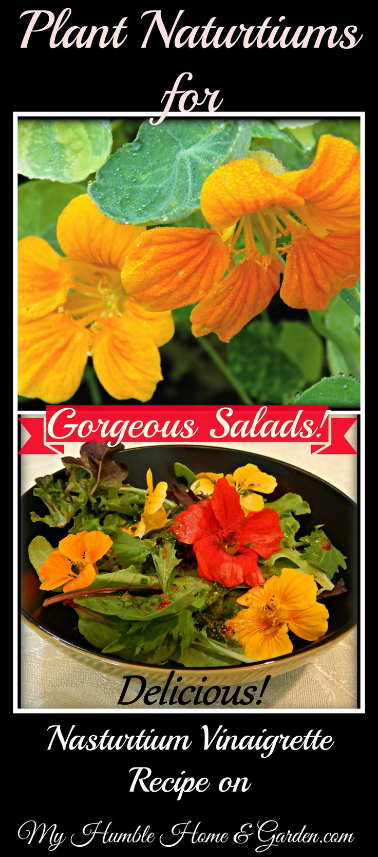 Epsom decking over a raised eyesore ashwell landscapes - Plant Nasturtiums This Spring Impress Your Friends With Beautiful Delicious Salads This Summer