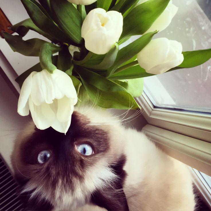 The flower cat