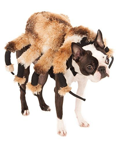 Best 25+ Dog spider costume ideas on Pinterest | Spider ...