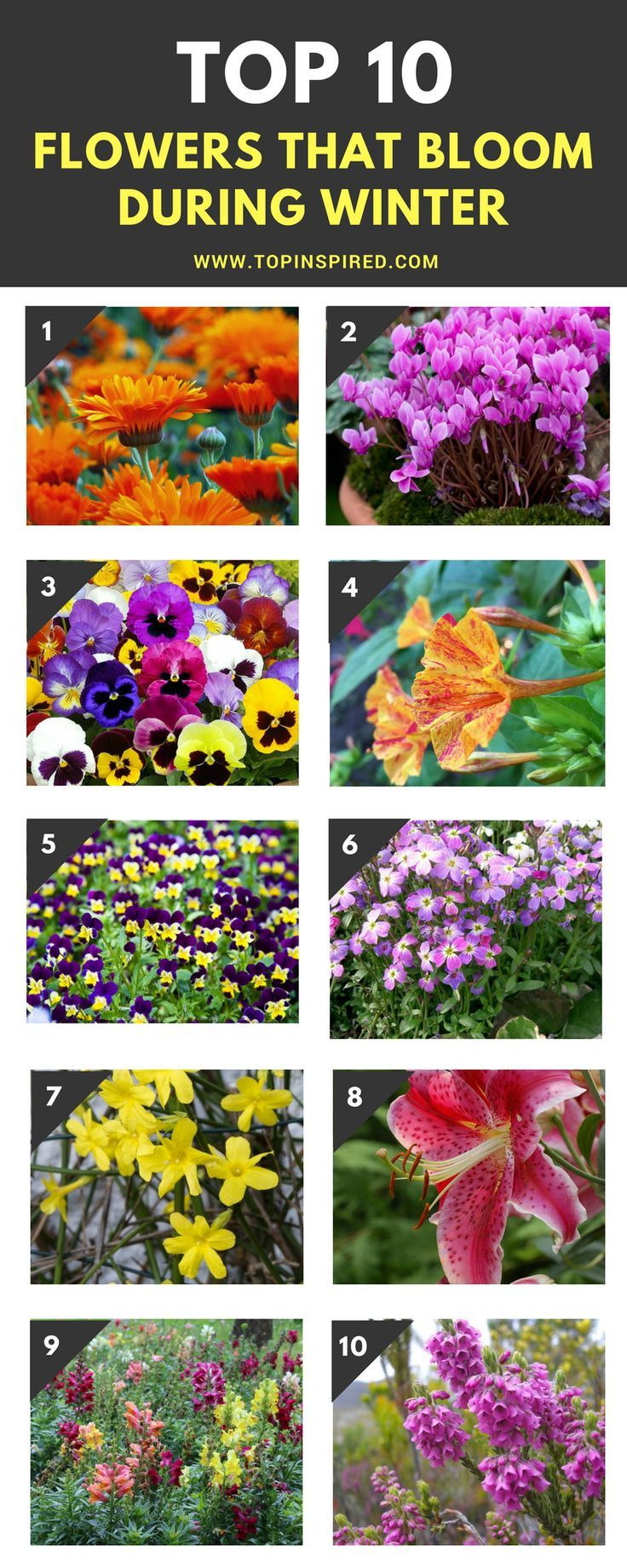 Top 10 Flowers That Bloom During Winter Winter Flowers Garden Winter Plants Winter Flowers