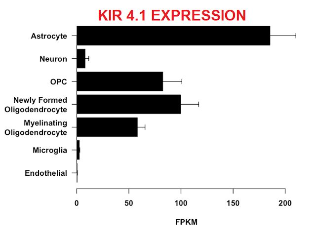 Potassium Channels as a major autoimmune target in MS it ain't Kir 4.1   Zhong R1Liang JTao AWu LYang XXu HHuang QZhuang SLong YGao C. Anti-KIR4.1 Antibodies in Chinese Patients with Central Nervous System Inflammatory Demyelinating Disorders. OBJECTIVES: The aim of this study was to explore the frequency of KIR4.1 antibodies in patients with multiple sclerosis (MS) and in control groups using a cell-based assay. MATERIALS AND METHODS: A transfected HEK-293A cell line expressing KIR4.1 was…