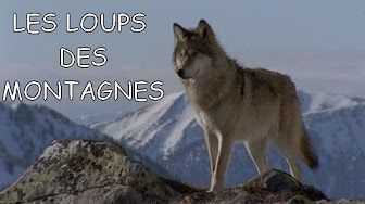 Documentaire vieux loups, jeunes chiens arte - YouTube
