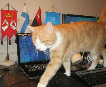 This cat can help me with typing while I'll don't need to type :)