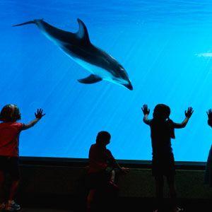 Discount coupons for shedd aquarium chicago
