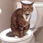 7 Toilet Training Cats Tips - http://www.mypetarticles.com/7-toilet-training-cats-tips/#more-408