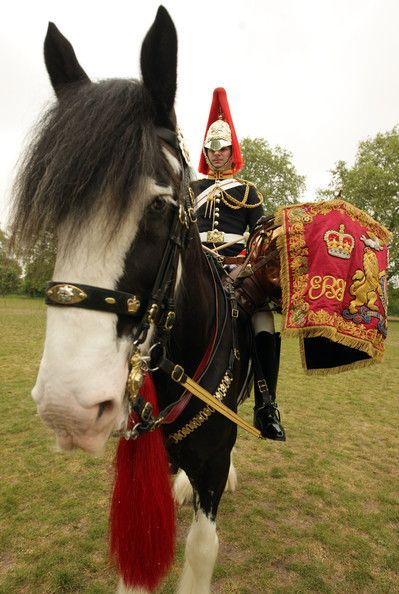 Drum horse of the Household Cavalry in Hyde Park