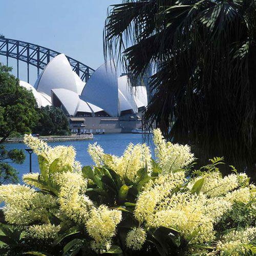 Margaret Preston. Royal Botanic Gardens. Sydney