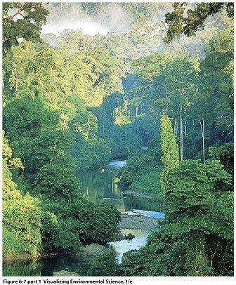 El Secreto de la Biodiversidad de los Bosques Tropicales: La Ecología del Suelo