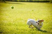 Tips on how to train your dog