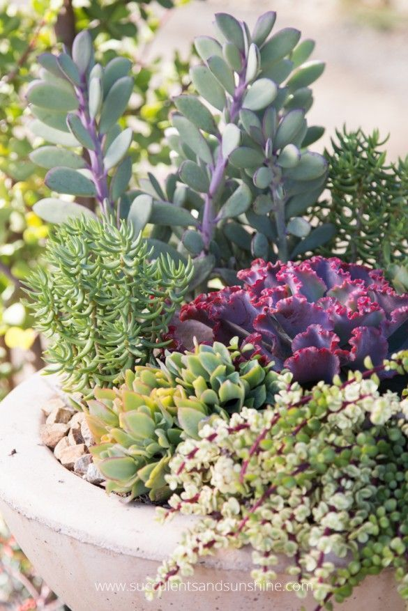 Succulents are so colorful so it works well to use basic color schemes when creating an arrangement