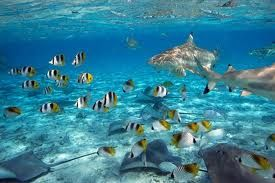sea: Poisson Animaux, Sons Amy, Animaux Marins, Sea, Plants Marines, Animaux Marines, Mond Marines, Poisons Animaux, Coral Reefs