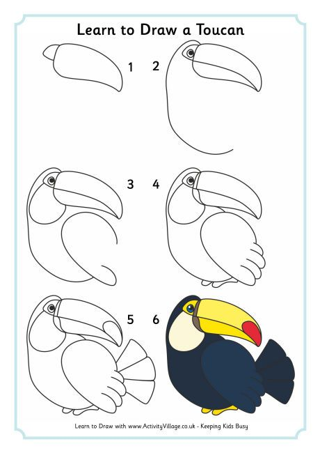 Learn to draw a toucan