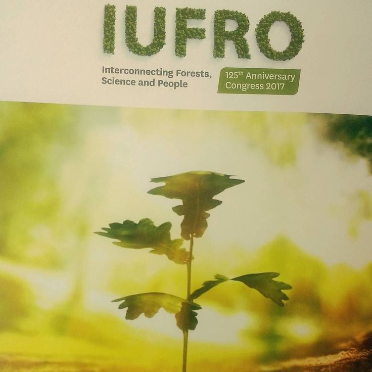 This week we are in Freiburg Germany introducing our project at #iufro2017 and leading a session about #CitizenScience #InvasiveSpecies and #ForestHealth. Stay tuned there are many awesome projects here and we're excited to learn more from them.