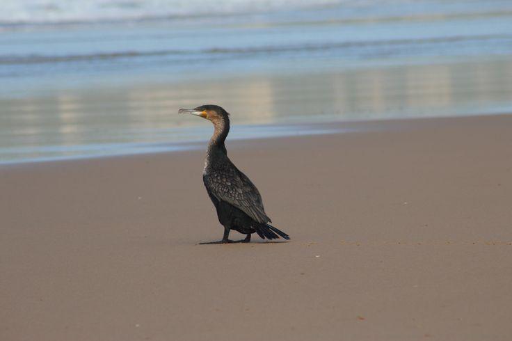 Og en på stranda.