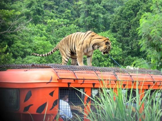 zoobic safari: Zoobic Safari, Kenzi Places, Zooooobic Safari