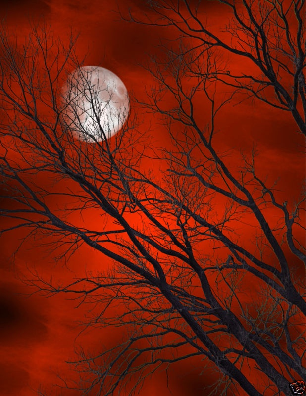 Red skies & moonHarvest Moon, The Colors Red, Black And White Red Pictures, Red Moon, Red Sky, Autumn, Red Black White Art, Oil Painting, Night Sky