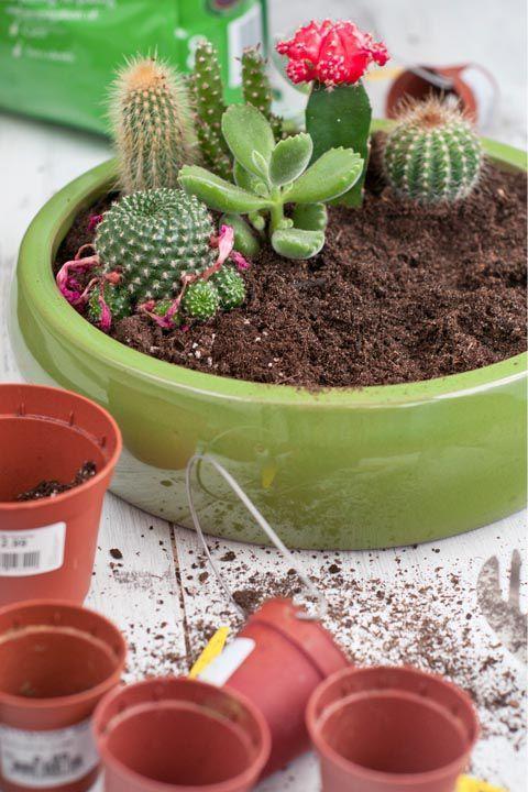 Pinterest & hanging flower pots online | Hanging Plants in 2019 | Small ...
