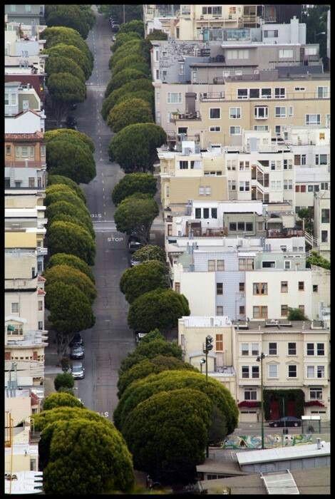 Broccoli Row in San Francisco