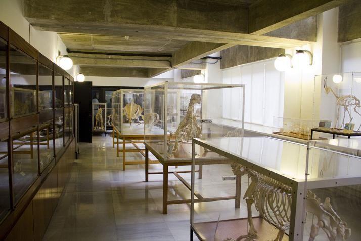 La Cátedra de Zoología de Vertebrados del Departamento de Zoología y Antropología Física, Facultad de Ciencias Biológicas, Universidad Complutense de Madrid, viene reuniendo, desde hace treinta año...
