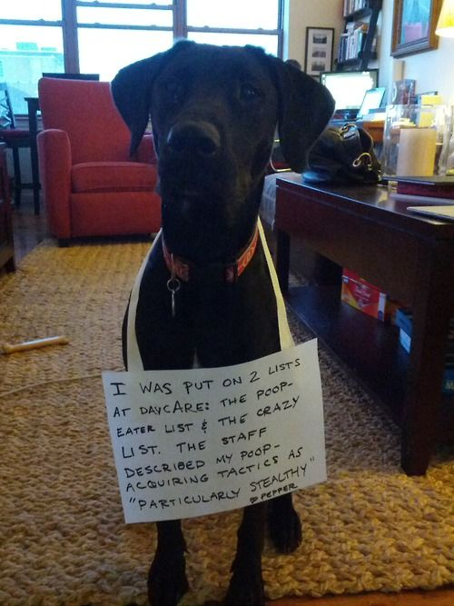Dog Eating Poop Bad Gas