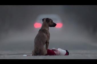 """""""Gift"""" el cortometraje que muestra el abandono animal con una niña adoptada - Mascotadictos"""