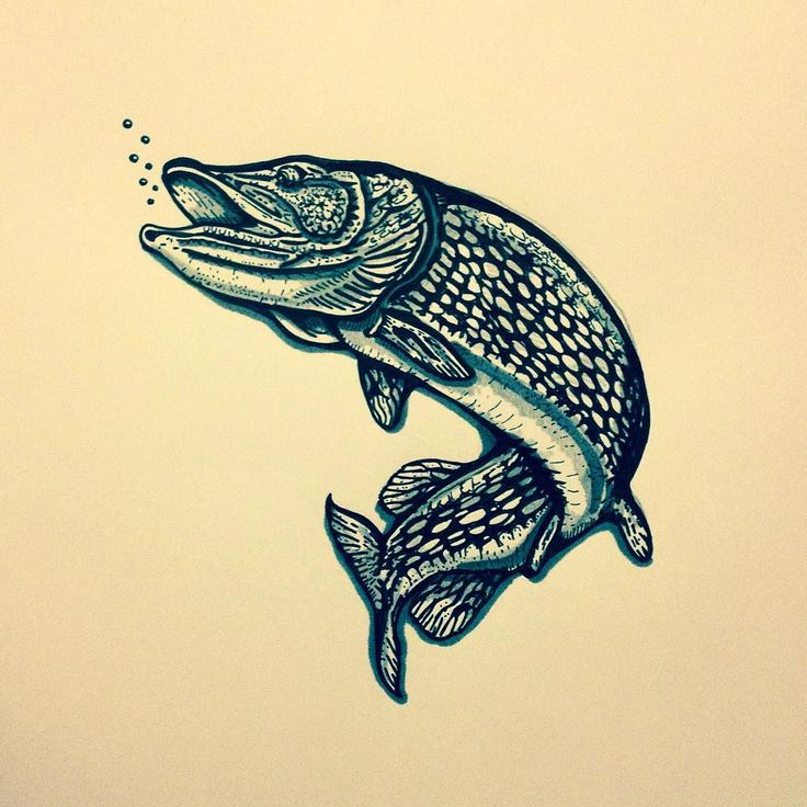 37 best images about fisketavlor on pinterest print minnesota and wildlife art. Black Bedroom Furniture Sets. Home Design Ideas