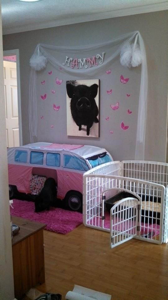 Mini Pig Indoor Housing