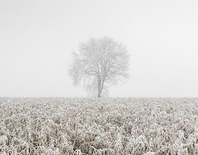 """Check out new work on my @Behance portfolio: """"Silver Morning"""" http://be.net/gallery/46888447/Silver-Morning"""