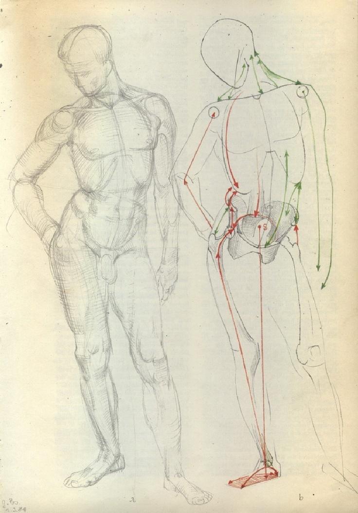23 best Gotfried Bammes images on Pinterest | Anatomy, Anatomy ...
