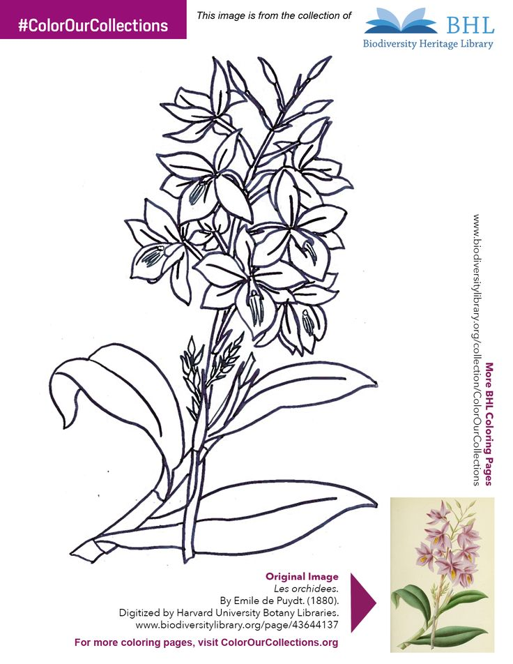 """#ColorOurCollections. Original Image: http://www.biodiversitylibrary.org/page/43644137. To download this image, right click on the pin and choose """"save image as"""" to save the image to your computer. You can then print and color at your leisure!"""