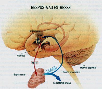Você já parou para pensar em como funciona o estresse? O que acontece no seu organismo para que o estresse gere tanto estrago? Saiba agora  http://www.centeyo.com.br/como-funciona-o-estresse-no-organismo/