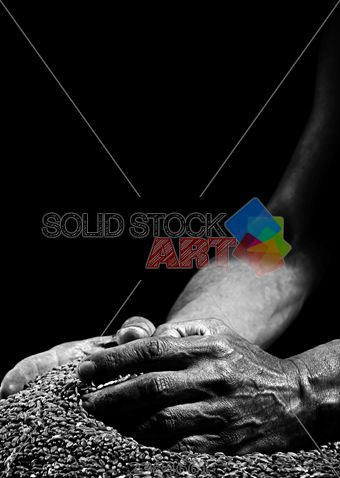 stock photo of a pile of wheat grains and the farmers hands