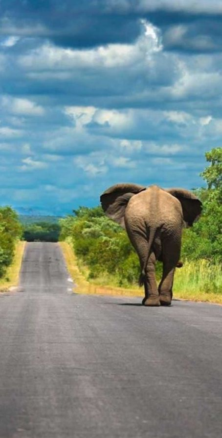 Taking the shortcut through Kruger National Park in South Africa • photo: Mario Moreno on 500px