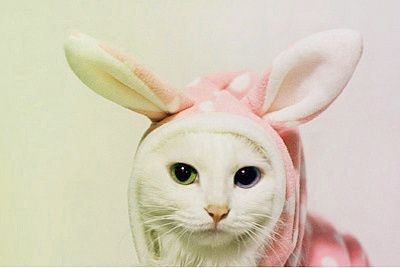 eyesRabbit, Costumes, Meow, Bunnies Kitty, Funny Cat, Pets, Easter Bunnies, Kittens, Animal