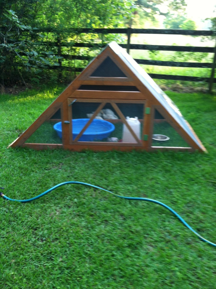 17 Best Images About Duck Pens On Pinterest Geodesic