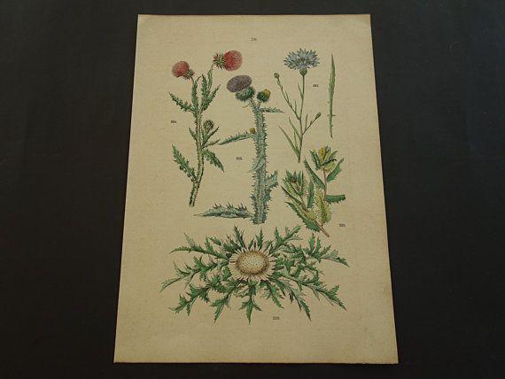 BOTANY print set of FOUR old botanical prints by DecorativePrints