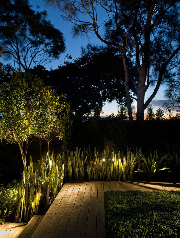 Lighting in Sansevieria mass planting. Maroubra, NSW Australia. Anthony Wyer + Associates www.anthonywyer.com
