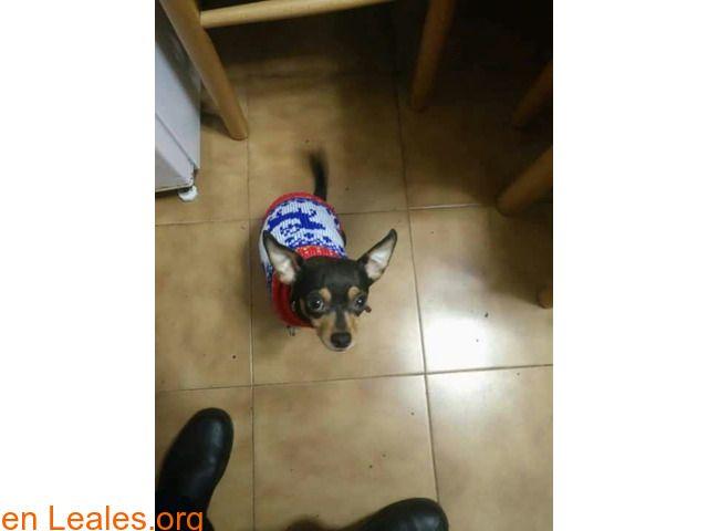 Perros perdidos  España  Las Palmas - Gran Canaria  Jinámar February 28 2018 at 08:45PM   GRAN CANARIA  #PERDIDO #ENCONTRADO  Contacto y Info: https://leales.org/perdidos-o-encontrados/perros-perdidos/gran-canaria_i3512 #Difunde en #LealesOrg un #adopta y sé #acogida para #AdoptaNoCompres O un #SeBusca de #perro o #gatos ℹ PERDIDO en JINAMAR! Lleva un collar rojo su familia lo esta buscando! 660305925 En todos los navegadores: Leales.org y en todas las redes sociales: @lealesorg   Acerca de…