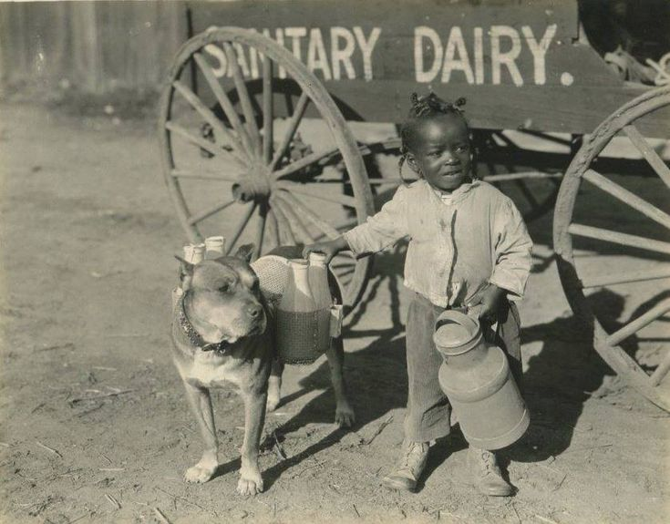 1924:  Lil Boy and Dairy Delivery  Service Dog  [Vintage Pit]